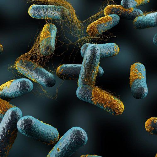 Probiotika und Clostridium difficile