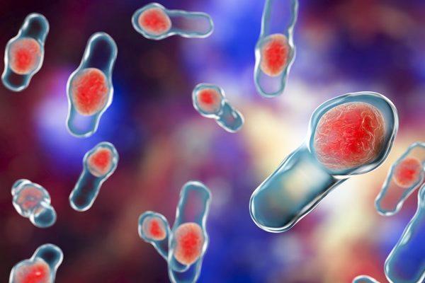 Clostridium difficile verursacht 15-20% der antibiotika-assoziierten Durchfälle und ist in mehr als 95% der Fälle für die Entstehung der pseudomembranösen Colitis verantwortlich. Bei etwas einer von 100 Personen, die mit Antibiotika behandelt wurden, muss mit einer Infektion mit C. difficile gerechnet werden.