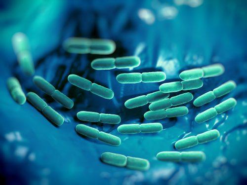 Schlankmacher-Bakterien