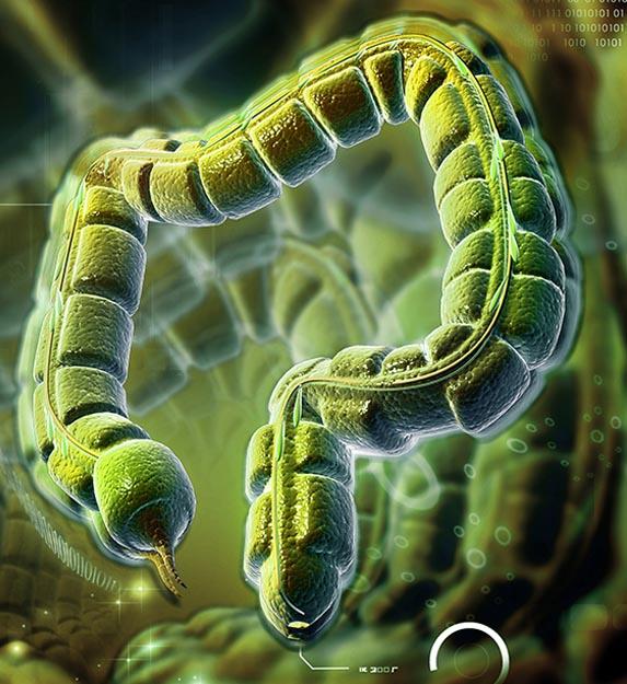 Warum gute Probiotika mehr als einen Bakterienstamm haben