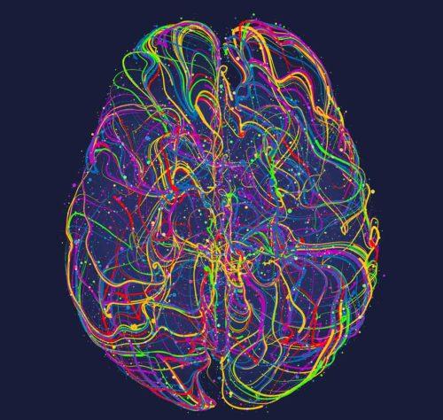 Probiotika und Gehirn